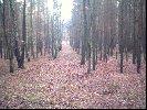Autor :DAniel Karkowski       Linia oddzialowa jest ważna w polowaniu zbiorowym