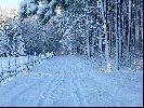 Zimowy Las cd.