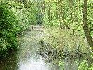 Lasy w okolicach Sułowa Fot. Daniel Skórski