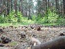 Wiosna w sułowskim lesie... Fot. Daniel Skórski
