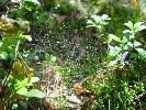 Las koło Marydołu