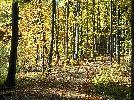 Las jesienią ( inne ujęcie )