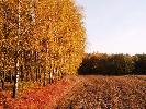 Jesień w łowisku, widok z ambony na Świniej Górze.