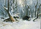 zdjęcie gróbego odynica , w zimowym lesie (csergzan pal)