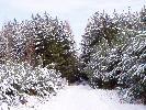 prawda że pięknie jest zima w lesie
