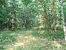 Las w okolicach Gierałcic. Lato 2005