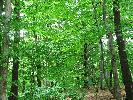 Prawdziwie soczysta zieleń lasu