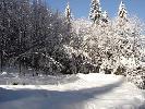 Ustrońkie lasy zimą...
