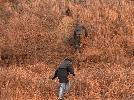 piękno polowania z nory