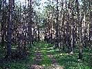 Jesien w lesie - widok i zapach nie do opisania