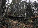 Dolina Bobru po wichurze