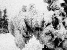 Zimowe rzeźby