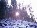 To także lasy na dolnym śląsku