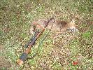 nowy zakup IŻ18 223 rem. i pierwszy strzelony z niego zwierz