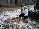 3 liski w pół godziny na pierwszym śniegu