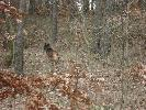 kundle w lesie