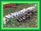 polowanie 12.11.2005