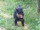 Mój pies MAX