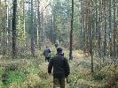 KŁ Rosochy --polowanie na dziki..