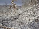Polowanie zimą