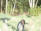 Moja ukochana wyżlica Wiki dużo umie .W tym roku nauczyłem ją poszukiwać i aportować zrzuty ma ich na swoim kącie 3 od jelenia i 2 od rogacza . Prawda że piękna psina ....