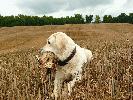 Prawdziwą przyjemnością jest polowanie z dobrze ułożonym psem.