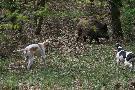 myśliwy bez psa to połowa myśliwego- zdj. wyk. 2009r.