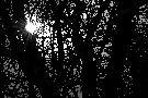 Grudniowe promienie słońca , prześwitują przez gęste konary drzew....