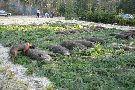 jedno z mazurskich polowań