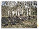 Czasem tak bywa, że w lasie pali się i to dzięki nie uwadze człowieka