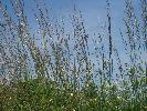 Trawy na polanie
