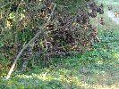 w gałęziach