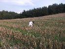 Snajpuś wpodczas przerwy w polowaniu :)